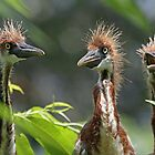 A Trio of baby Tri`s ! by jozi1