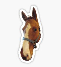 A Horse of Course Sticker