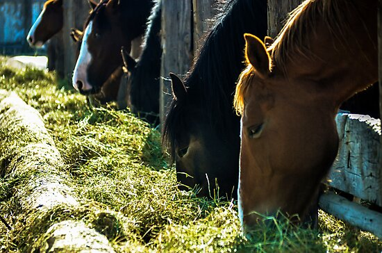 Horses Feeding by SRLongstroth