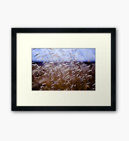 grass on blue Framed Print