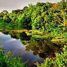Morning Reflections off Lake Pickens by aprilann