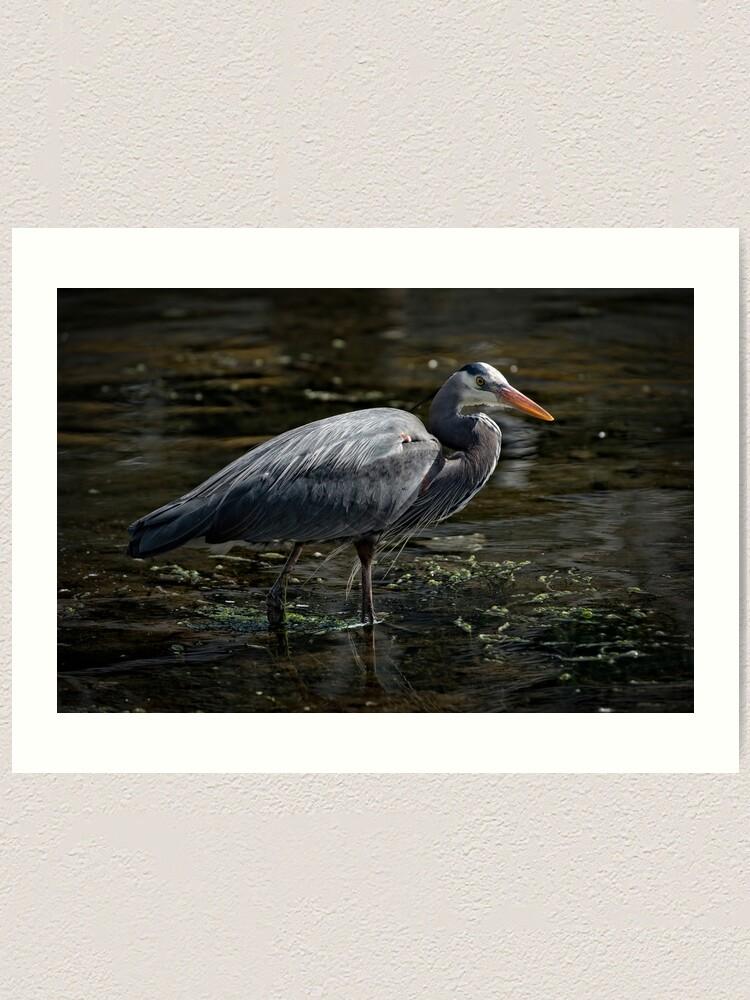 Alternate view of Blue Heron: A Simple Portrait Art Print