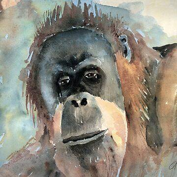 Orangutan by awagner