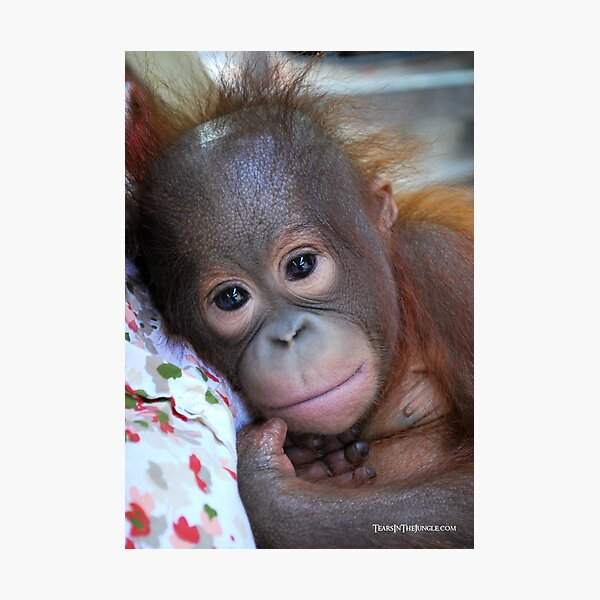 A Beautiful Baby Photographic Print