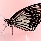 even butterflies have spots by lensbaby