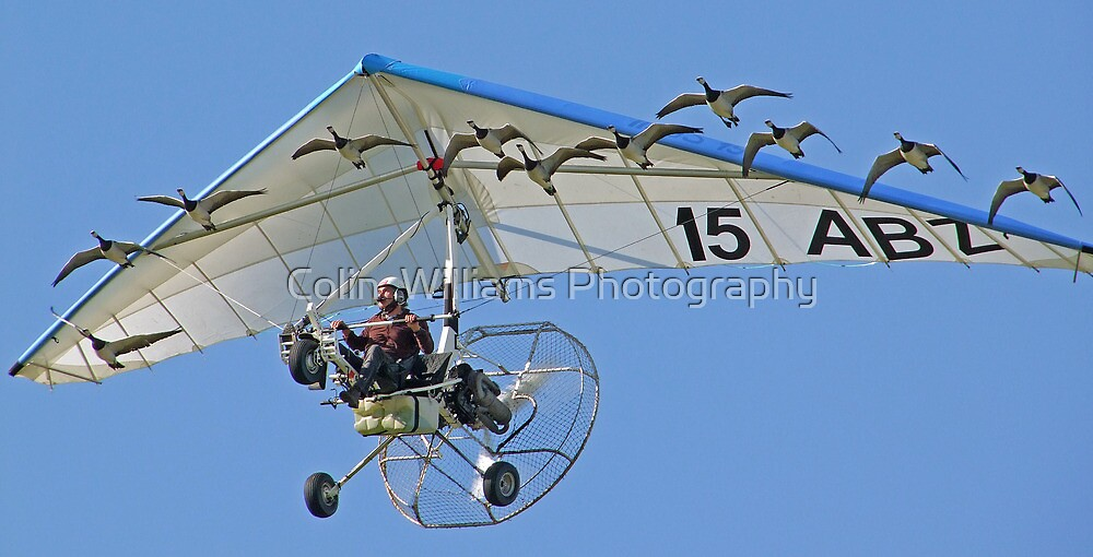 Chritain Moullec And His Birds by Colin  Williams Photography