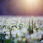 Snowflakes by Martin Rak