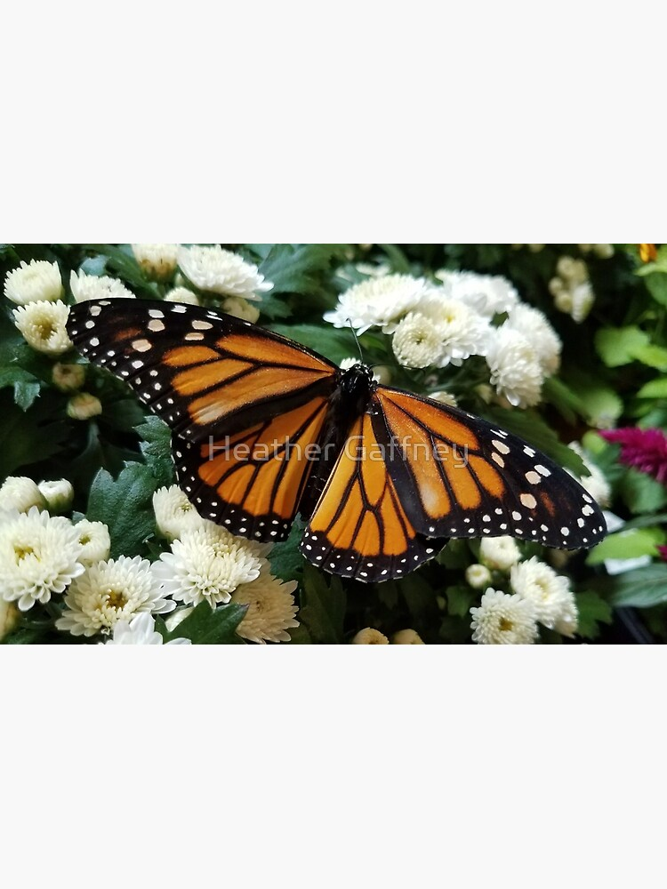 Monarch Butterfly by MamaCre8s