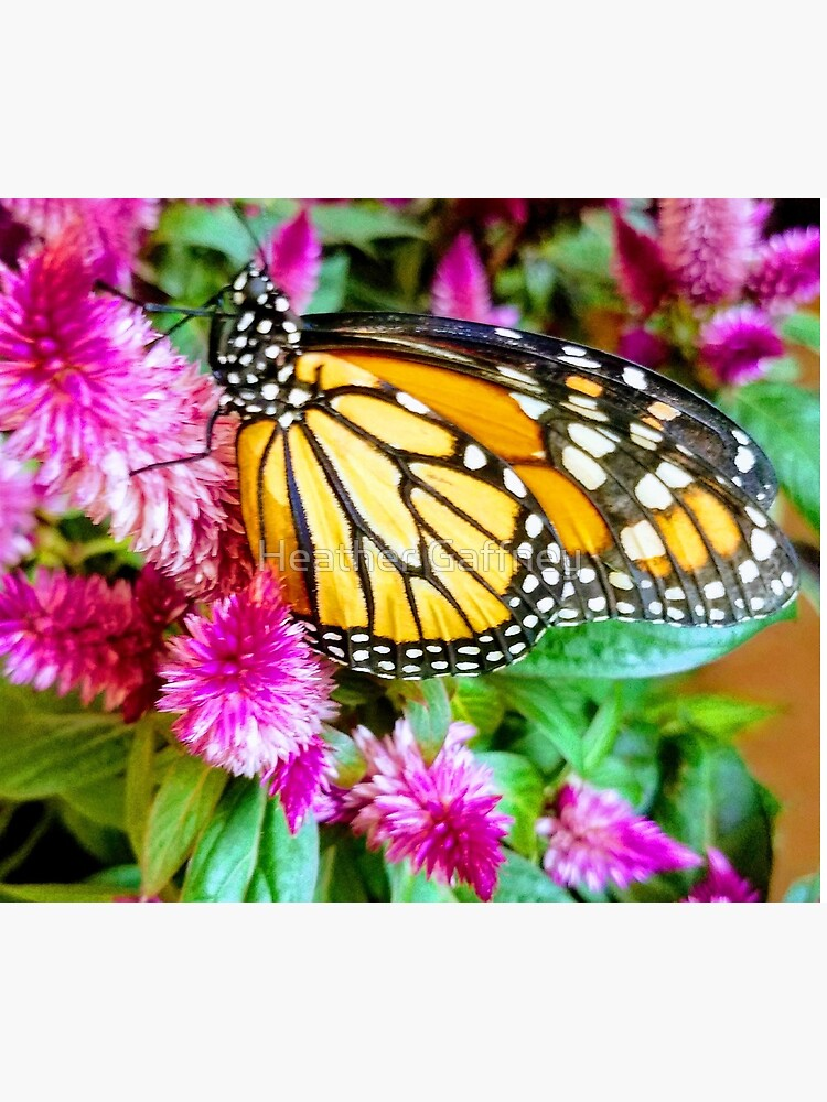 Monarch Butterfly Profile by MamaCre8s