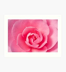 Macro Camellia Art Print