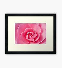 Macro Camellia Framed Print