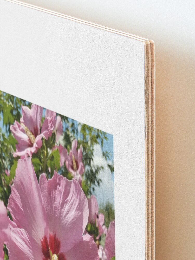 Alternate view of Pink Hibiscus Flower in the Summer Mounted Print