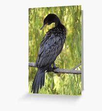 Hi - And I Am A Cormorant - Hola - Soy Un Cormorán Greeting Card