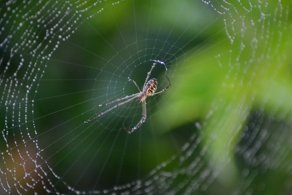 There's a Spider in my Garden by TheaShutterbug