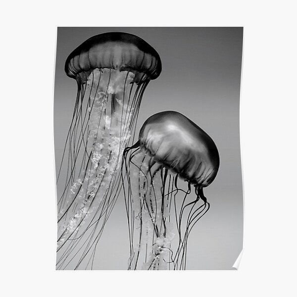 Double jellyfish Poster