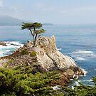 Lone Cypress by Deborah Singer
