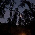 Black Spur Headlights by Timo Balk