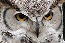 Great Horned Owl portrait by JimGuy
