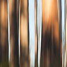 Mountain Ash by Timo Balk