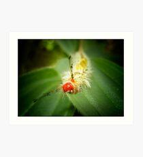 Tussock Moth Caterpiller Art Print