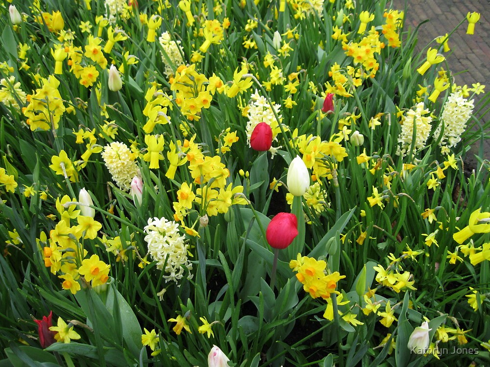 A Splash of Scarlet - Tulips among the Daffodils by Kathryn Jones