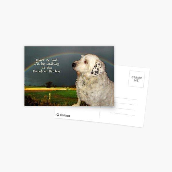 Sympathy Card For Pet Postcard