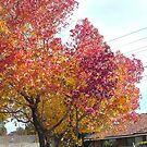 Autumn leaves by AmandaWitt