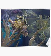 Lionfish - coloured Poster