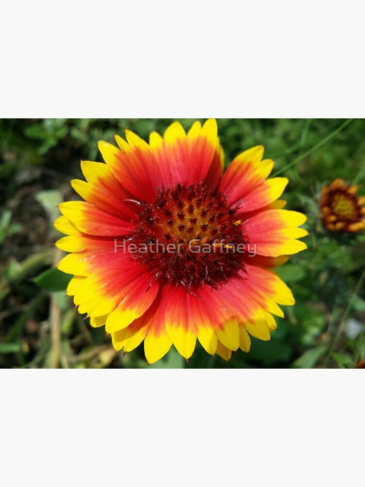 Red and Yellow Sunflower by MamaCre8s