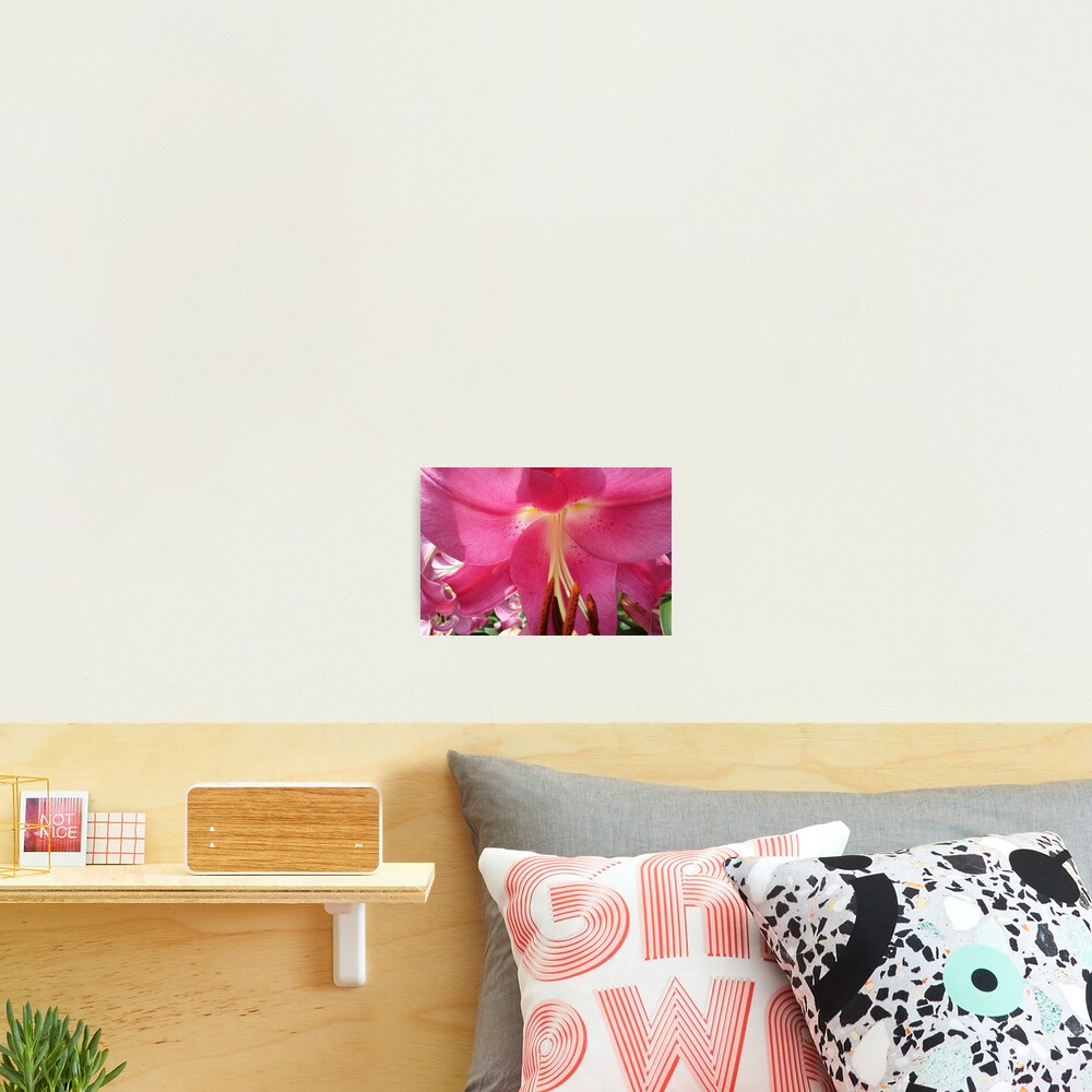 Lovely Pink Lily Photographic Print