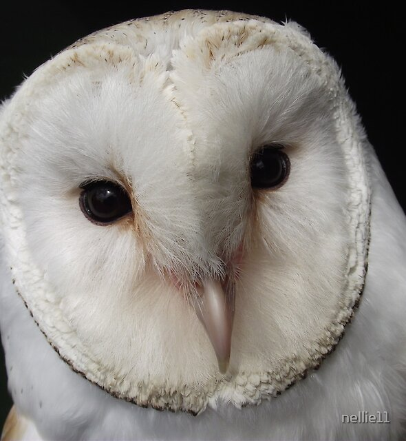 Boogie the Barn Owl by nellie11