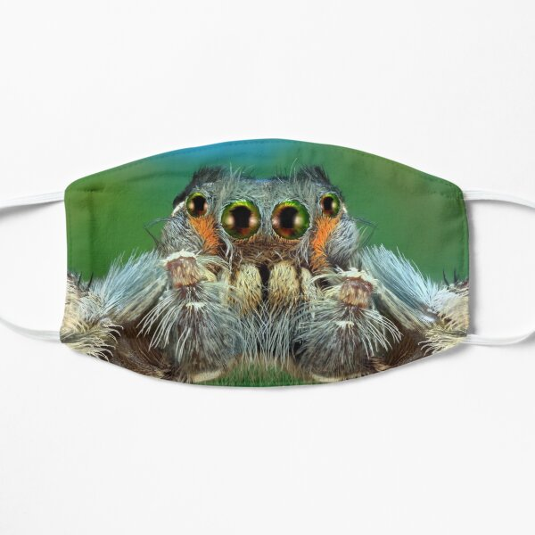 Putnami male Jumping spider macro  Flat Mask