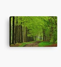Walking through the spring forest Canvas Print