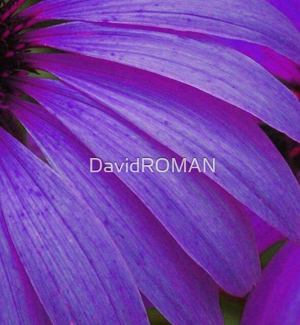 Moments by DavidROMAN