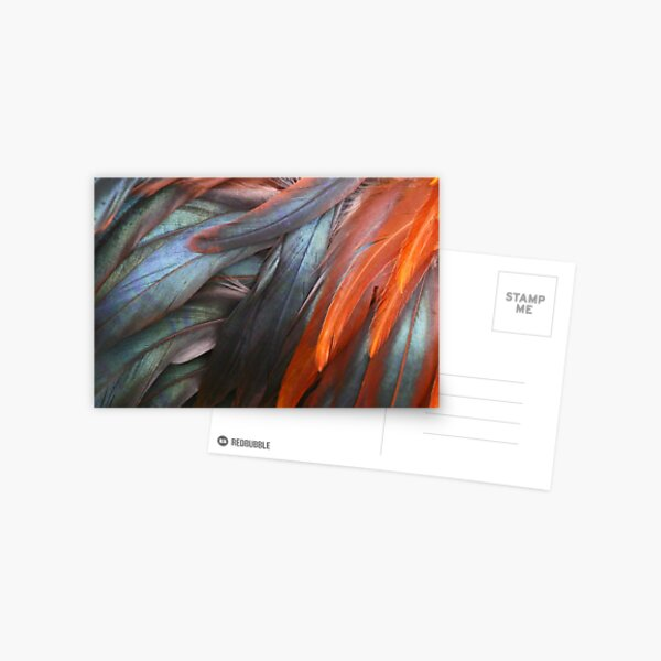 Feathers - Nature's Abstract Postcard