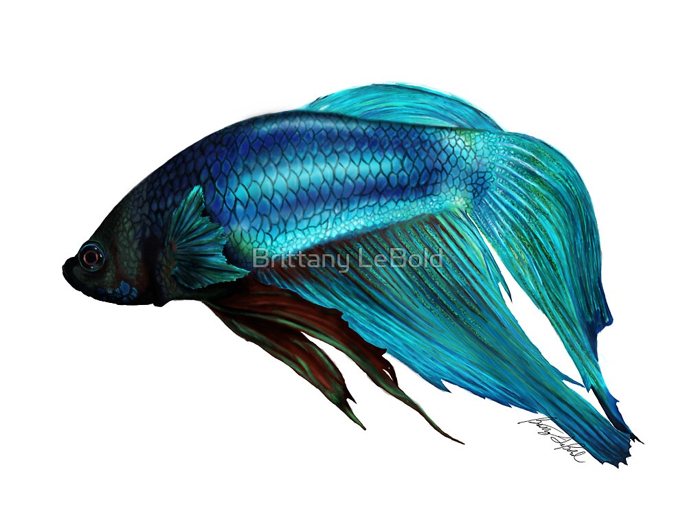Betta fish digital painting by brittany lebold redbubble for Betta fish painting