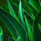 Dark Leaves by Richard Earl