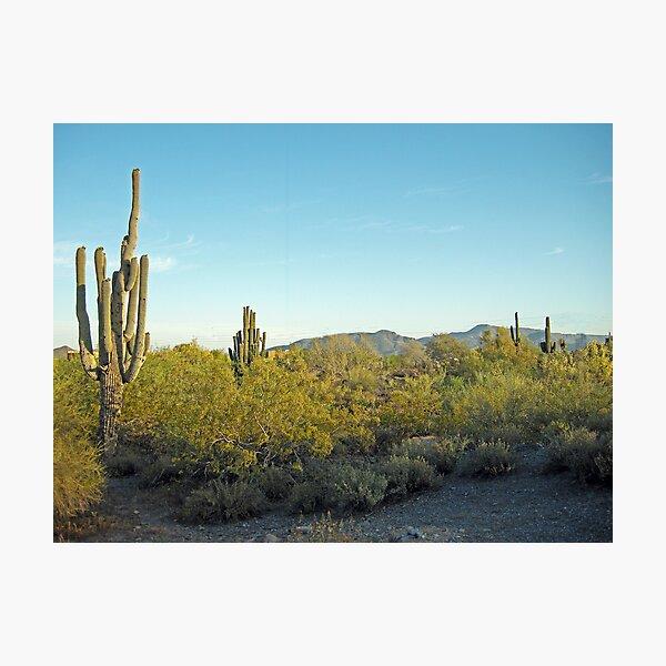 Desert Morning  Photographic Print