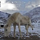 White horse stretching on an icy morning, Nepal by John Spies