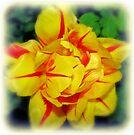 Monsella Tulip by KatarinaD