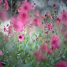 In the midst of Pink..... by Becca7