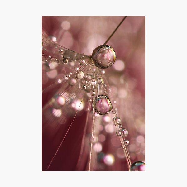 Raspberry Dandy Sparkles Photographic Print