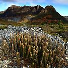Cradle Mountain Rocket by Garth Smith