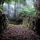Valder Bridge - Mt Wilson NSW Australia by Bev Woodman