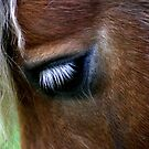 Eyeball by Kevin Meldrum