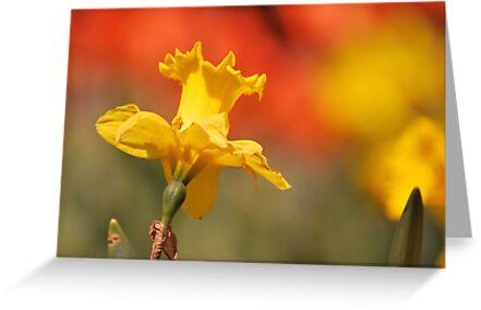 Sunshine On Daffodil by Joanne  Bradley