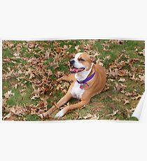 DeeDee Girl outdoors Poster