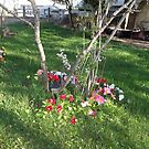 Pretty flowers by stirlingacre