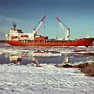 Icebird at Mawson by Peter Hammer