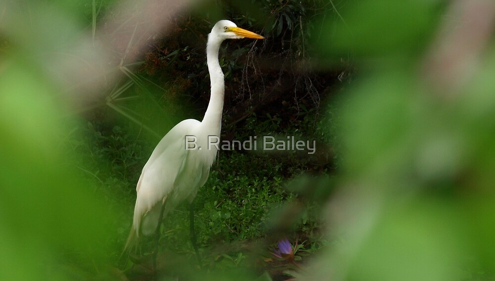 Great egret by a lily pad by ♥⊱ B. Randi Bailey